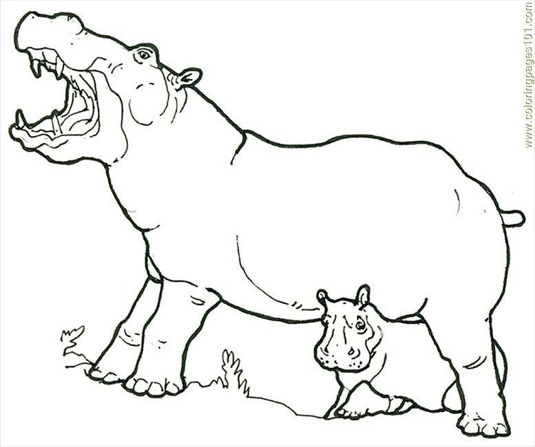 Hipopotamo Para Colorear - AZ Dibujos para colorear