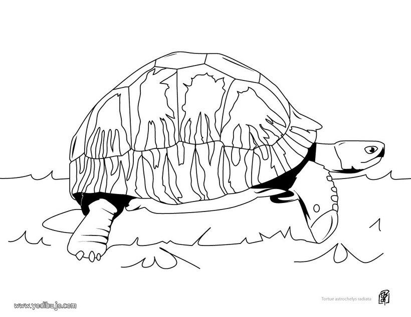 Reptiles Para Colorear - AZ Dibujos para colorear