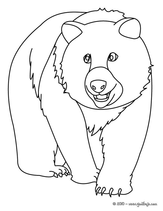 Dibujo Oso Pardo Az Dibujos Para Colorear