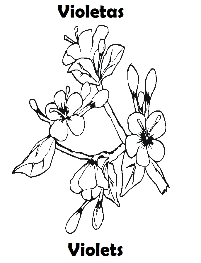 Colorear Flores Primavera - AZ Dibujos para colorear