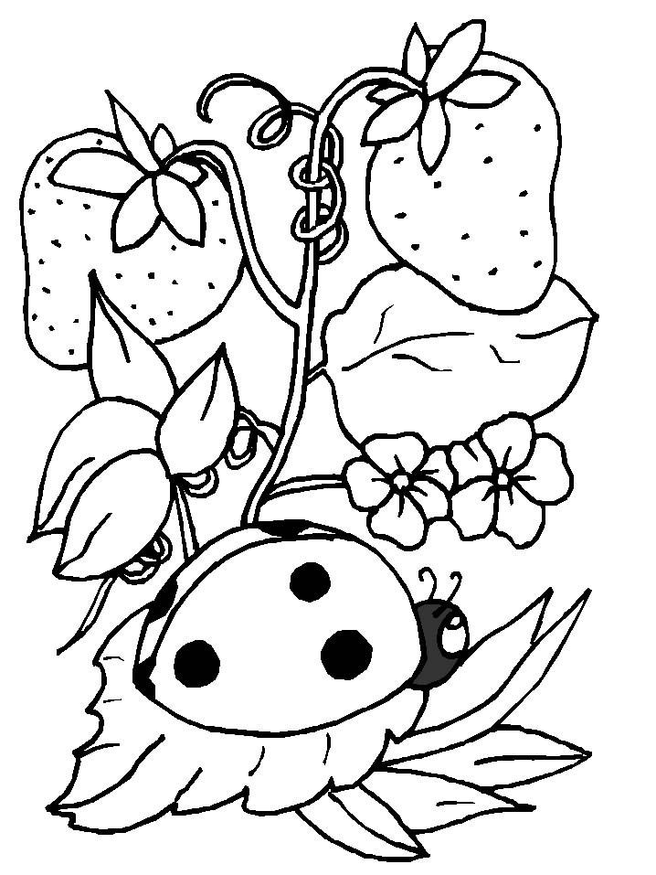 Insectos Dibujos - AZ Dibujos para colorear