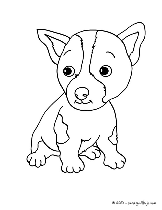 Dibujos De Pitbull Americano Para Colorear | Drawing and Coloring ...