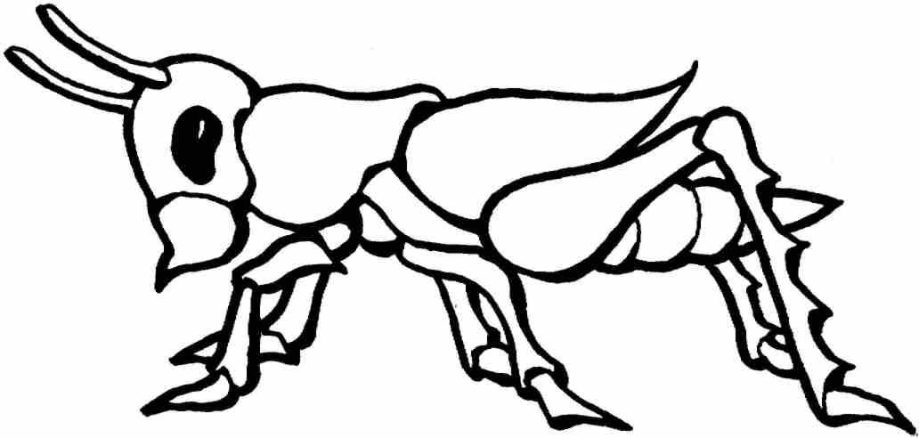 Insectos Colorear - AZ Dibujos para colorear