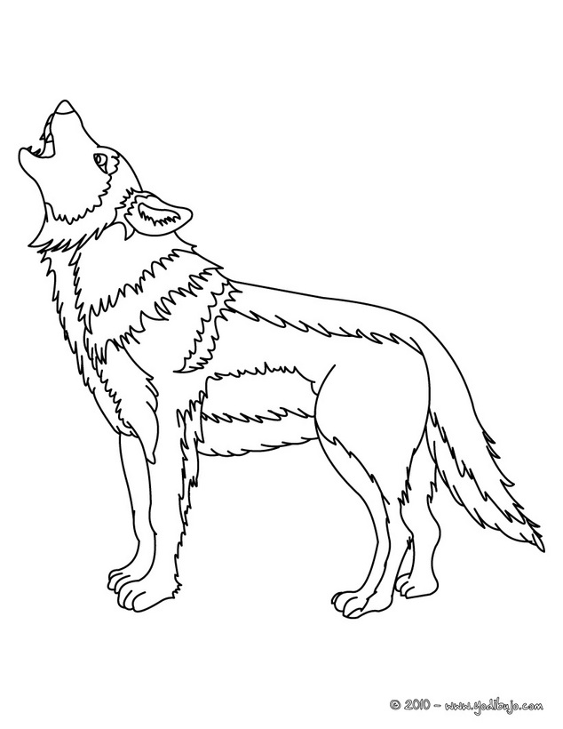 Bebé Lobo Colouring Pages