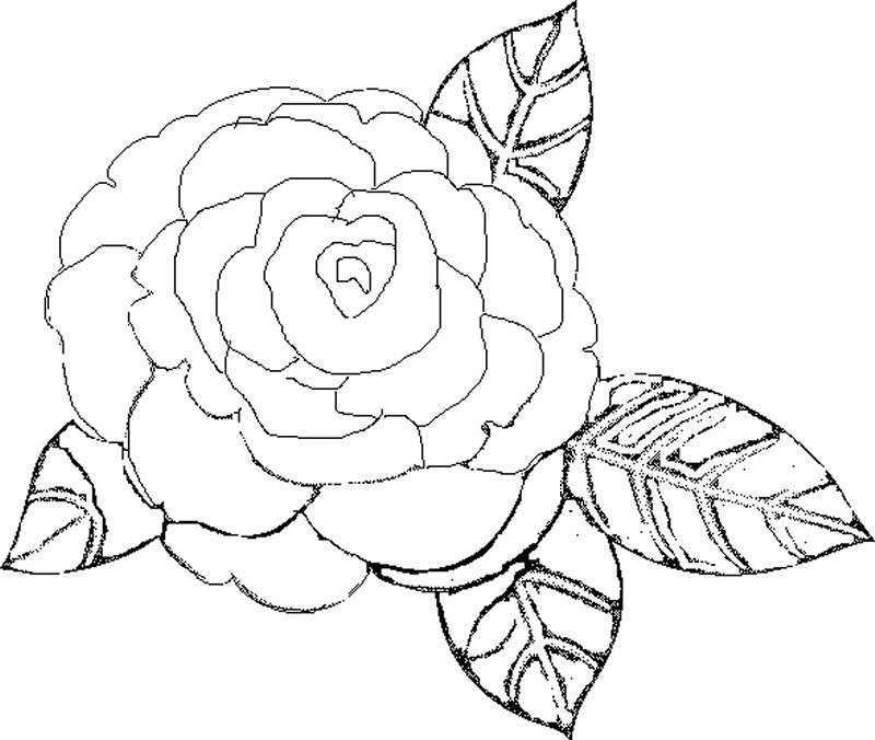 Dibujos De Flores Bonitas Para Colorear  AZ Dibujos para colorear