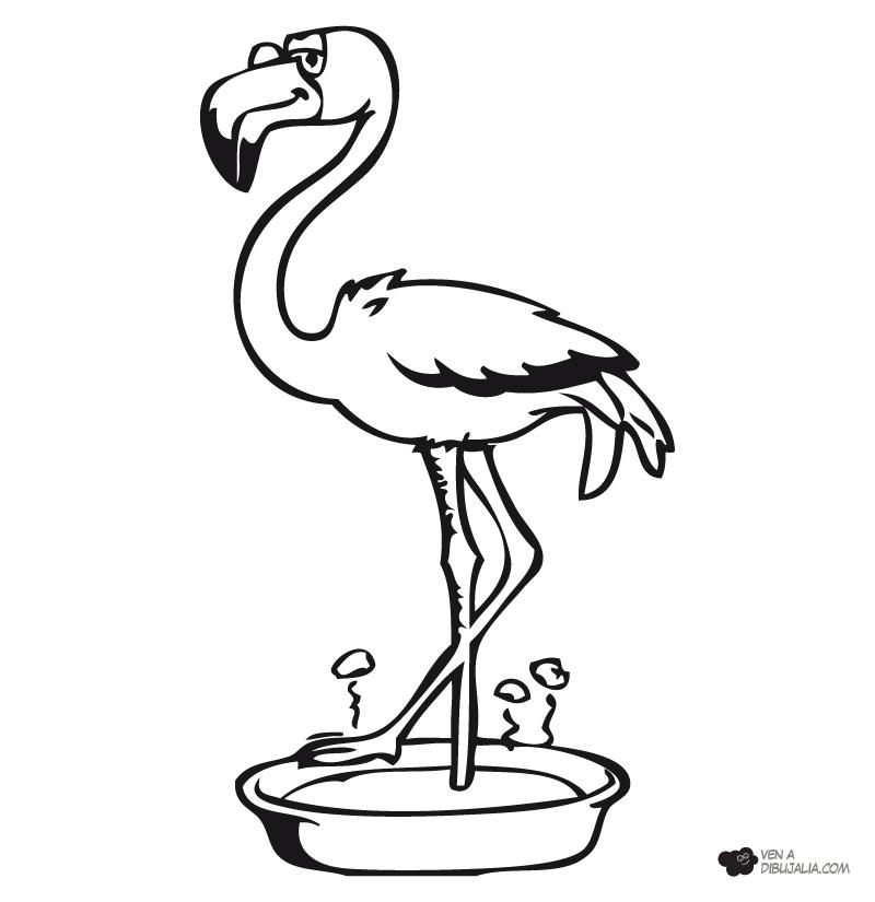 Aves Para Colorear - AZ Dibujos para colorear