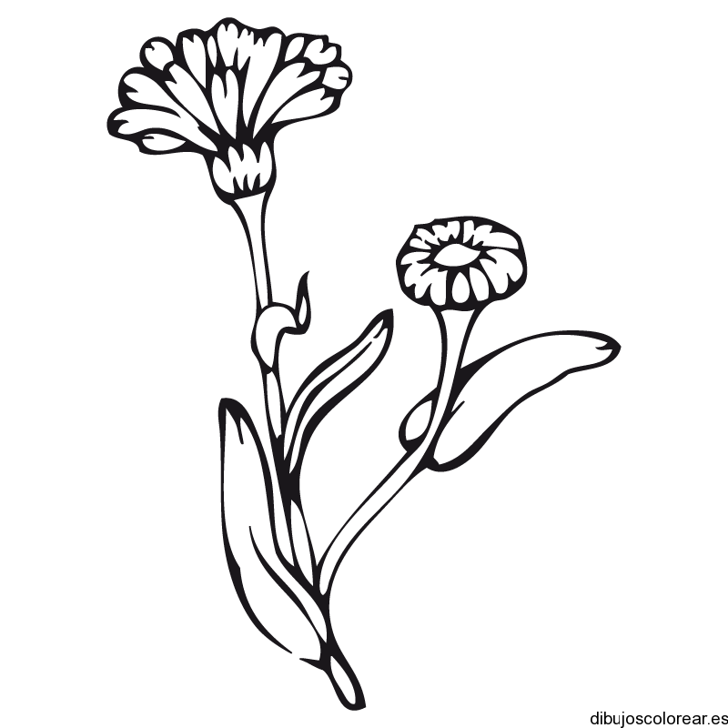 Girasoles Para Colorear - AZ Dibujos para colorear