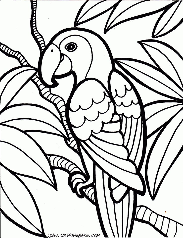 parrot coloring pages trendvee
