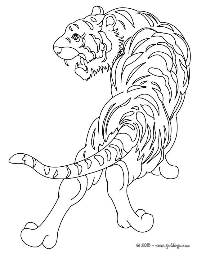 Dibujos Animales Salvajes Para Colorear Az Dibujos Para