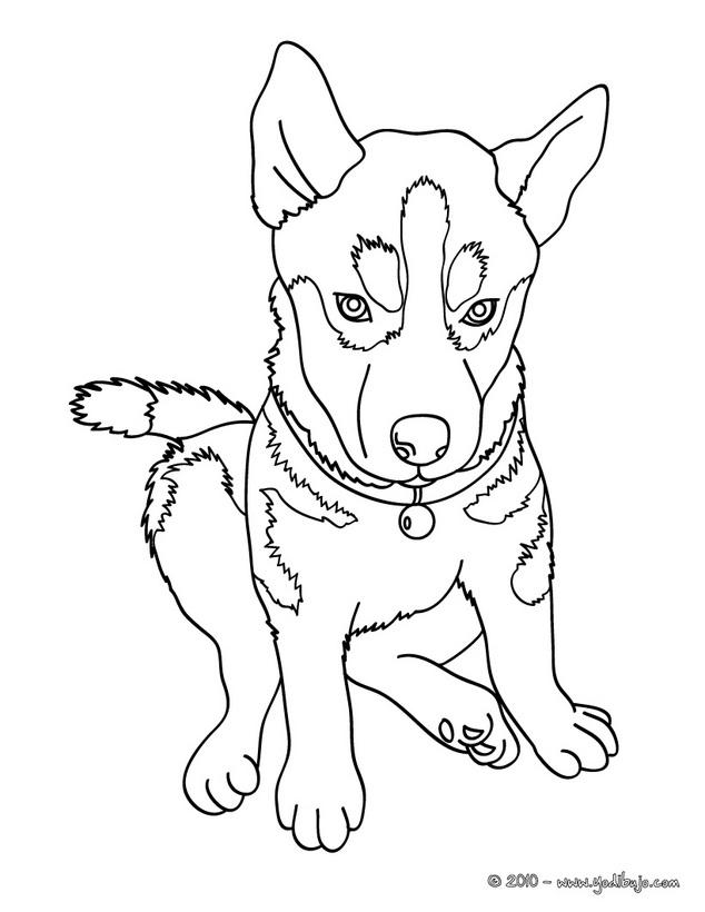 Dibujos Perros Cachorros - AZ Dibujos para colorear