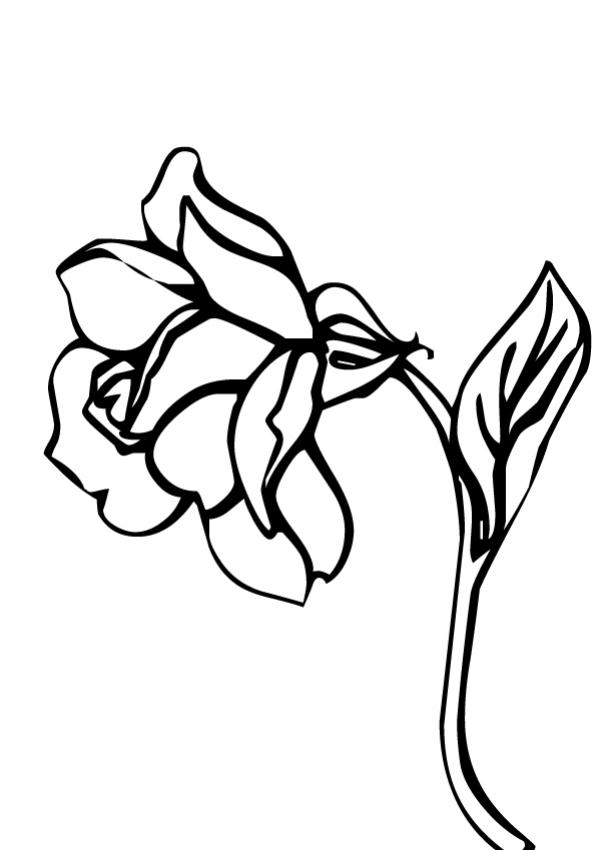 Para Colorear Coloring Pages Flores Pintar Y Dibujar Amigo