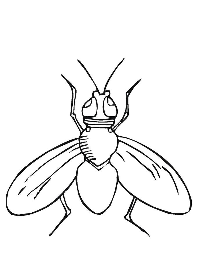 Dibujos De Insectos Para Imprimir - AZ Dibujos para colorear